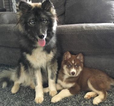 Zeke and Timber