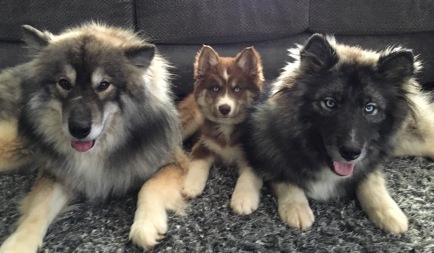 Theo, Timber and Zeke