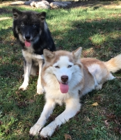 Zeke and Sadie