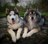 Jerzi and Theo